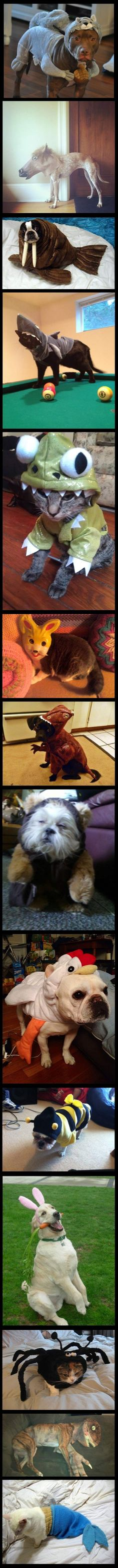 Animals dressed up as animals -