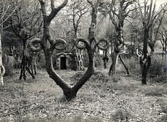 Google Axel Erlandson's Tree circus