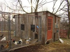 Large Chicken Coop from scraps. Super cheap!