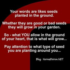 What are the seeds??? Yup! Your words...