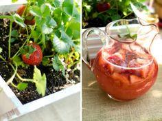 picnic parti, strawberri picnic, strawberri lemonad, strawberri parti, strawberri favor
