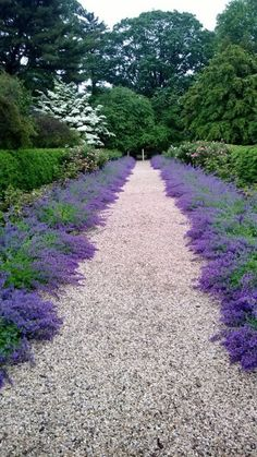 Amazing And Beautiful Emerald Blue Creeping Phlox Ideas (7)