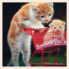 #cats #babycat #love
