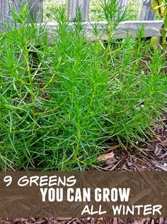 9 greens you can grow all winter long (that aren't kale!)