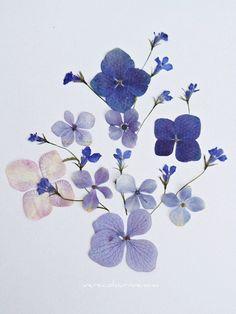 pressed flowers inspir art, flower inspir, floral patterns, dried flowers, flower ideas, blue weddings, tattoo, blues, hydrangeas