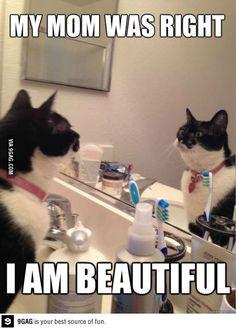 Self Help Cat