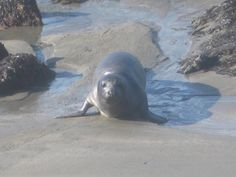 Drive the PCH, see seals