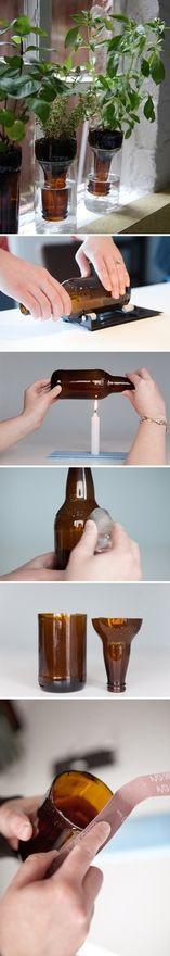 Repurposed beer bottles into plant holders.