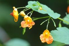 Summer Wildflowers in Michigan: identifying unknown plants. How do you ID unfamiliar flowers? birdsandblooms.com