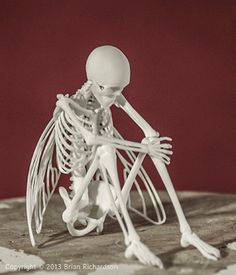Fairy Skeleton 3D Print Taxidermy  Ready to by MythicArticulations, $60.00
