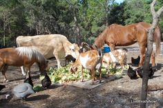 Grow Your Own Animal Feed, Part III