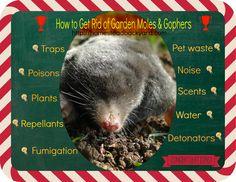 How to Get Rid of Garden Moles & Gophers
