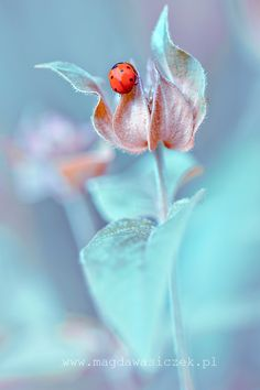 Lady Bug & Flower