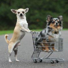 Grocery shoppin nbd
