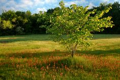 The rolling fields and bright wildflowers surrounding Lake Eufaula make it a beautiful destination.