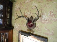 Nancy's Daily Dish: Antlers on the walls