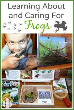 Learning About and Caring For Frogs  Racheous - Lovable Learning - Unschooling