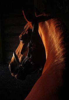 www.pegasebuzz.com | Equestrian photography : Nicky Stewart