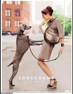 Weimaraner love....raji?? @Nicole Novembrino Novembrino Novembrino Novembrino Charles Ball longchamp, dog, practic bag