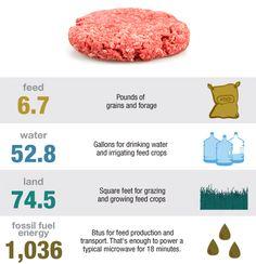 What It Takes To Make A Quarter-Pound Hamburger