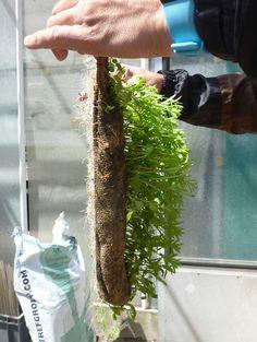 plant, vertic garden, tile, garden knowhow