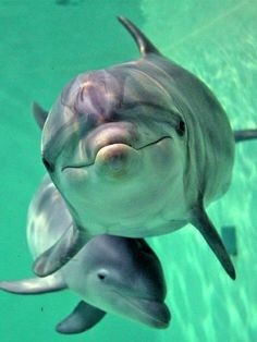 My all time fave...Dolphins!