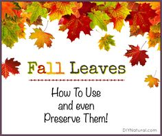 20 Uses for Fall Leaves Around the Yard and Home