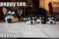 Puppy see...puppy do