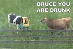 Bruce, you are drunk.