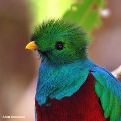 A quetzal. National bird of Guatemala. My dad's country.