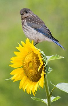 Grow your own:  10 flowers that produce bird seed.