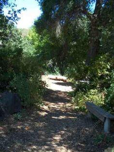 California native full shade plants