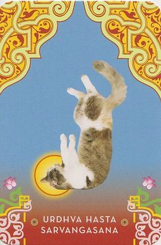 Cat Yoga by Jennifer @ Not Your Momma's Cookie, via Flickr