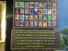 After 24 years of searching, Kjell Sandved found that all 26 Letters of the English alphabet and all digits 0-9 are found on butterfly wings!