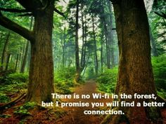There is no Wi-fi in the forest, but I promise you will find a better connection.  #nature #quotes #inspirational #outdoors