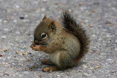 Most adorable Baby Squirrel ever