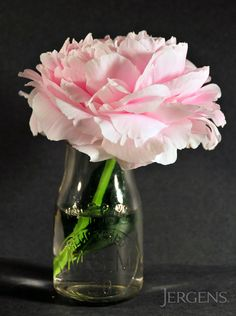 Pink Peonies: A burst of color in gray winter months!