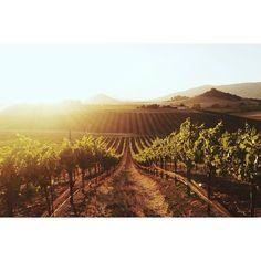 Wolff Vineyards in San Luis Obispo, California / photo by Kevin Russ