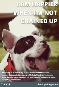 Unchain your dog and eliminate the possibility of attacks. According to a 2006 study at the University of Minnesota, chained dogs are 2.6 times more likely to bite than unchained dogs. Happier, healthier dogs get exercise in a fenced-in area or recreating with owners. www.koolcollar4dogs.com