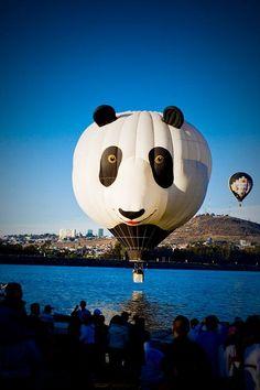Beautiful hot air balloons photography