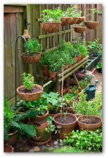 vegetable gardening tips  TheTankFarm.org
