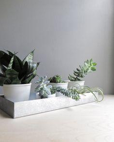 #wohnen #interior #living #pflanze #plants #pflanzenfreude #planters #pflanzen