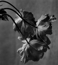 ©Christian Coigny
