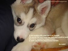 Funny_husky_pictures 10