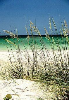 The Beach of Florida's Gulf Coast