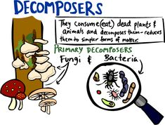 Kid's Corner - Decomposers Page