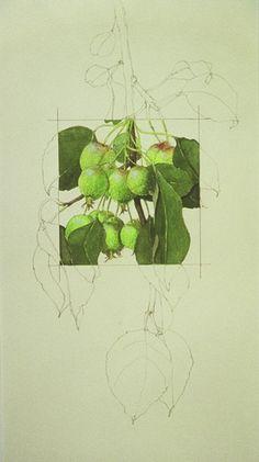 Apples Squared - S J Morris