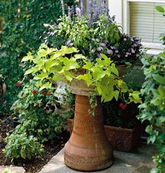 Creative Container Gardens • When grown in containers, annuals and perennials are short-term, seasonal plantings. • If you mix several types of plants in one container, make sure they share the same growing requirements, such as light and water. • Use dark-colored blooms in front of a light-colored house and light-colored blooms in front of a dark house. • Don't place too many colors in one pot. If you have more than one pot, repeat the same color in each one for continuity.