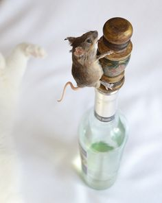 Taxidermy. Mouse. Wine. Stopper! $40.00, via Etsy.