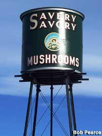 Westminster, CO - Savery Savory Mushrooms Water Tower